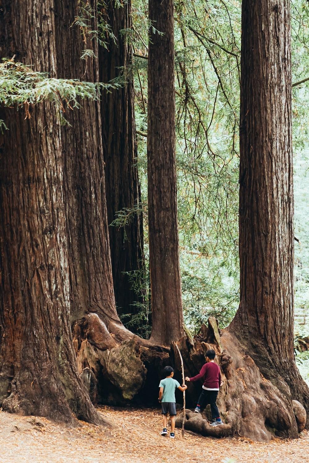 Wald Familie